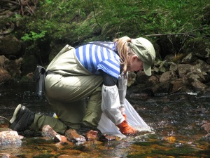 Sampling benthic stream invertebrates